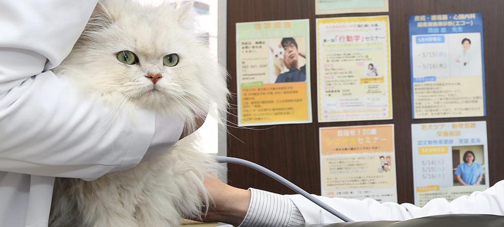 動物病院事業