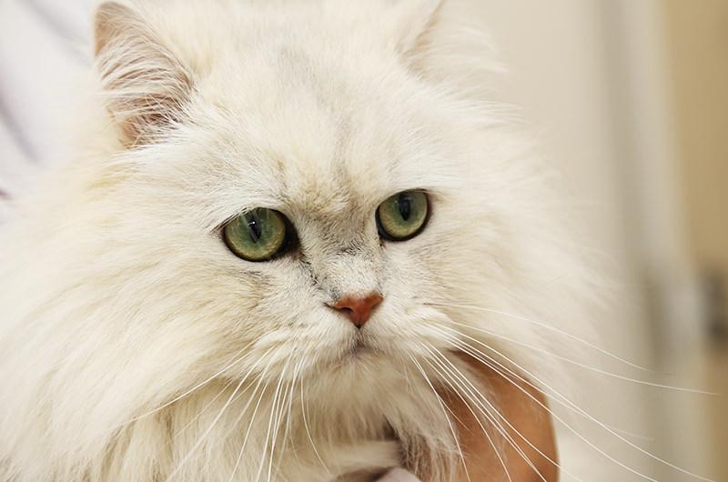 代表取締役猫の八太郎(やたろう)